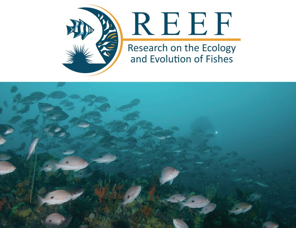 Research on the Ecology and Evolution of Fishes